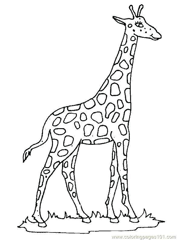 585x794 Giraffes Coloring Pages Giraffes Coloring Pages Giraffe Coloring