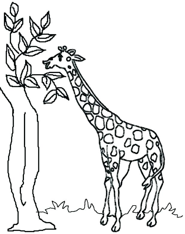 618x782 Coloring Giraffe Coloring Pages Printable Cute Cartoon Colouring
