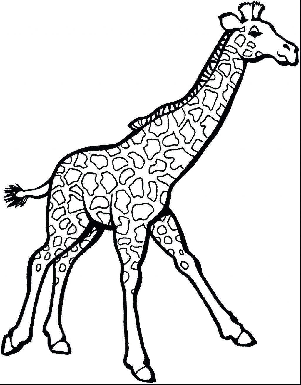 1024x1311 Coloring Pages Zoo Animals Coloring Pages Giraffe Cartoon Page