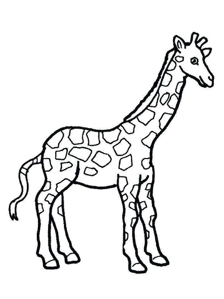 718x957 Giraffe Coloring Page Giraffe Coloring Pages To Print Giraffe