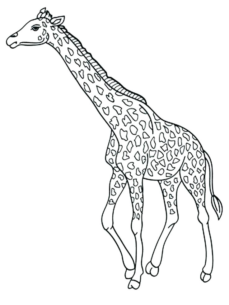 736x981 Giraffes Coloring Pages Giraffe Coloring Pages To Print Giraffe
