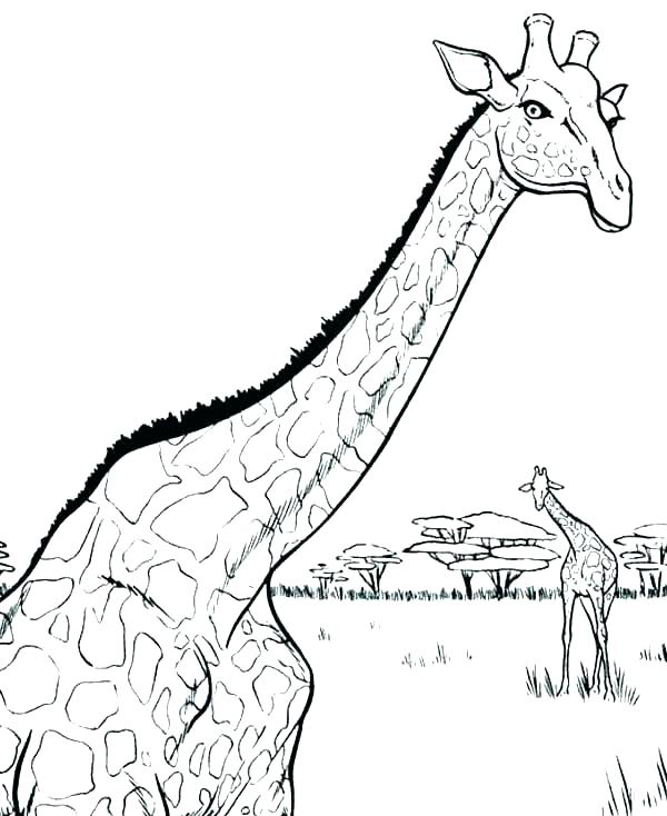 600x734 Giraffe Coloring Pages Free Giraffe Coloring Pages For Adults