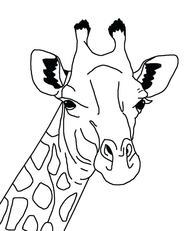 600x750 Giraffe Coloring Sheet S S S Able S Giraffe Coloring Pages