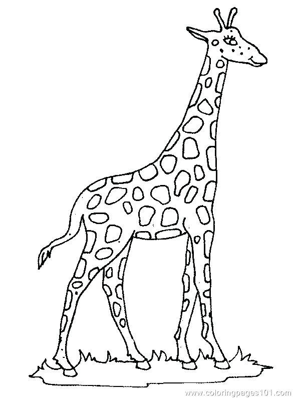 585x794 Giraffe Coloring Page Baby Giraffe Coloring Page Giraffe Colouring