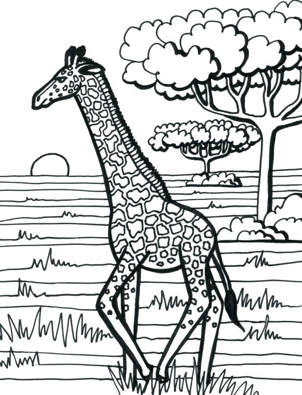 618x810 Giraffe Coloring Page Giraffe Coloring Pages A Preschool Giraffe