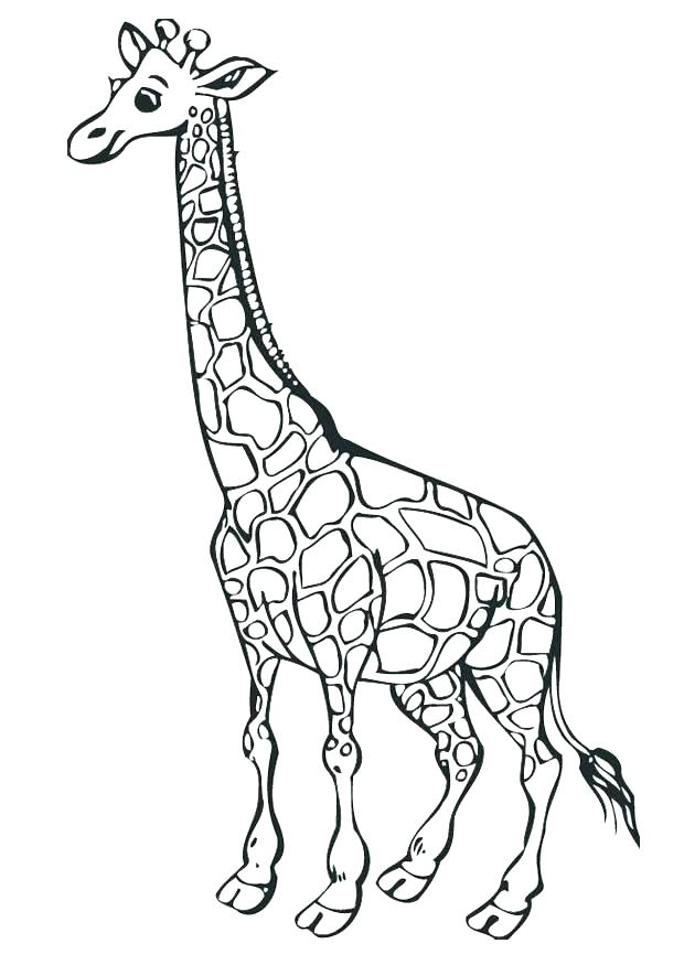 620x875 Giraffe Color Page Coloring Page Giraffes Color Picture