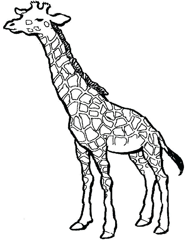 650x830 Giraffe Color Page Simple Giraffe Outline You To Paint A Picture