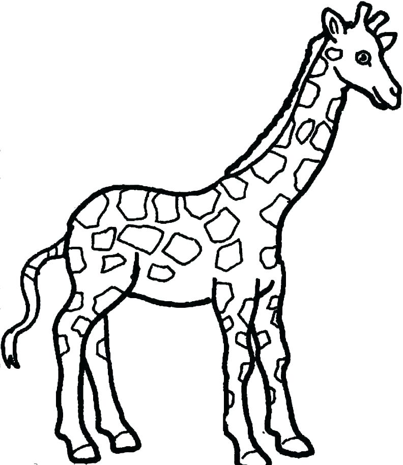 792x914 Baby Giraffe Color Pages Printable Coloring Best Photos Of Giraffe