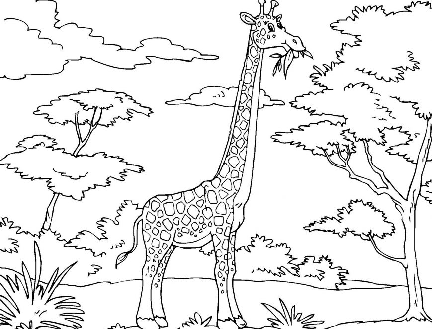 869x662 Giraffe Coloring Pages Picture Ideas Baby Colouring Printable