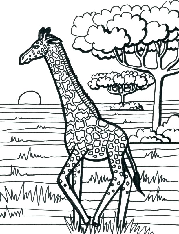618x810 Giraffe Coloring Pages Printable Giraffe Coloring Pages Free