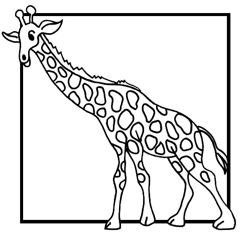 500x480 Kids N Coloring Pages Of Giraffe