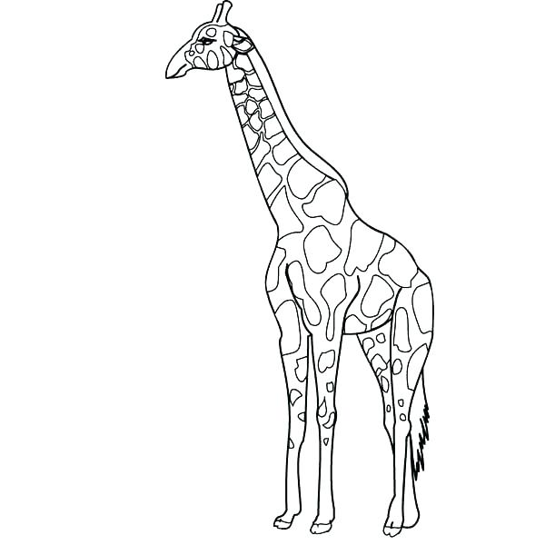 600x600 Cute Baby Giraffe Coloring Pages Printable Coloring Coloring Page