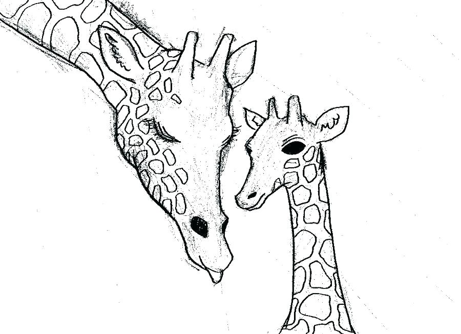 900x653 Cute Giraffe Coloring Pages Cute Baby Giraffe Coloring Pages