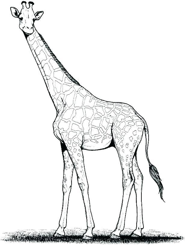 615x813 Giraffe Coloring Page Giraffe Coloring Page Giraffe Coloring Pages