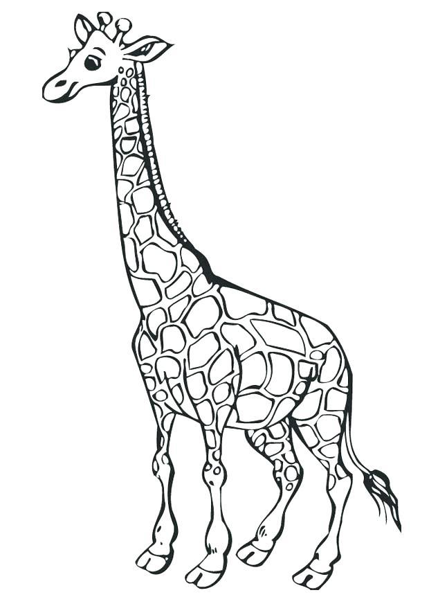 620x875 Giraffe Coloring Pages Printable Giraffe Coloring Pages Printable
