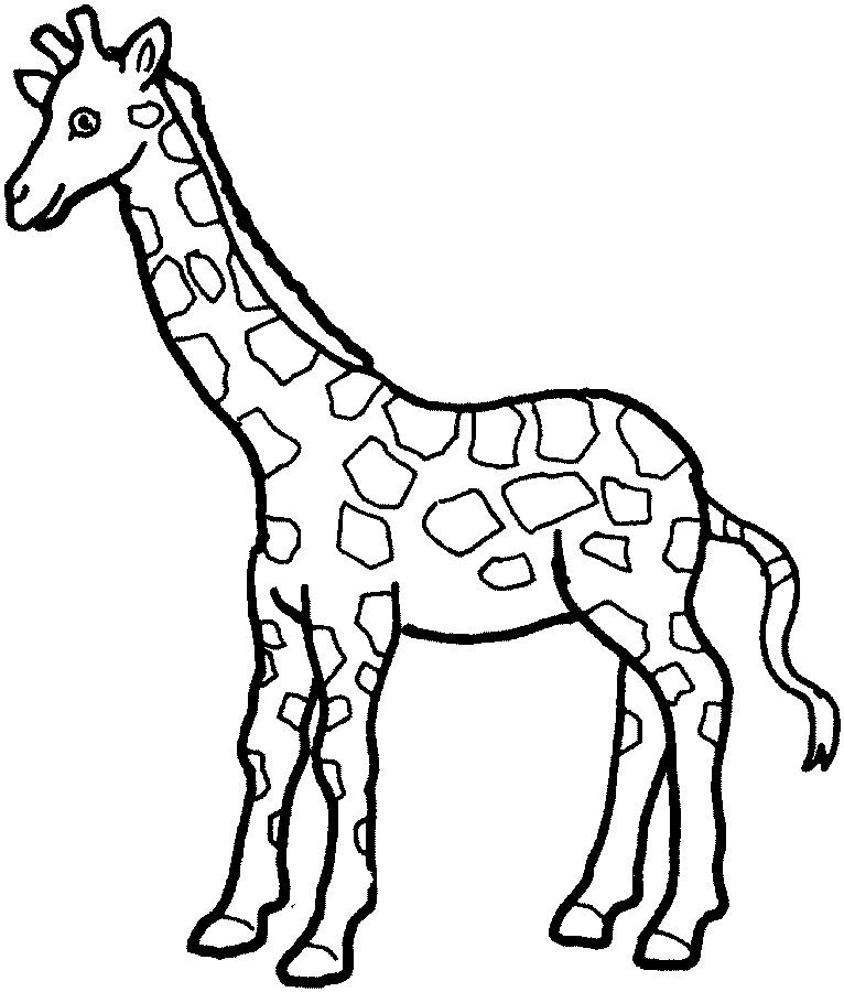 766x900 Simple Giraffe Outline Print Out And Color Pictures Of A Variety