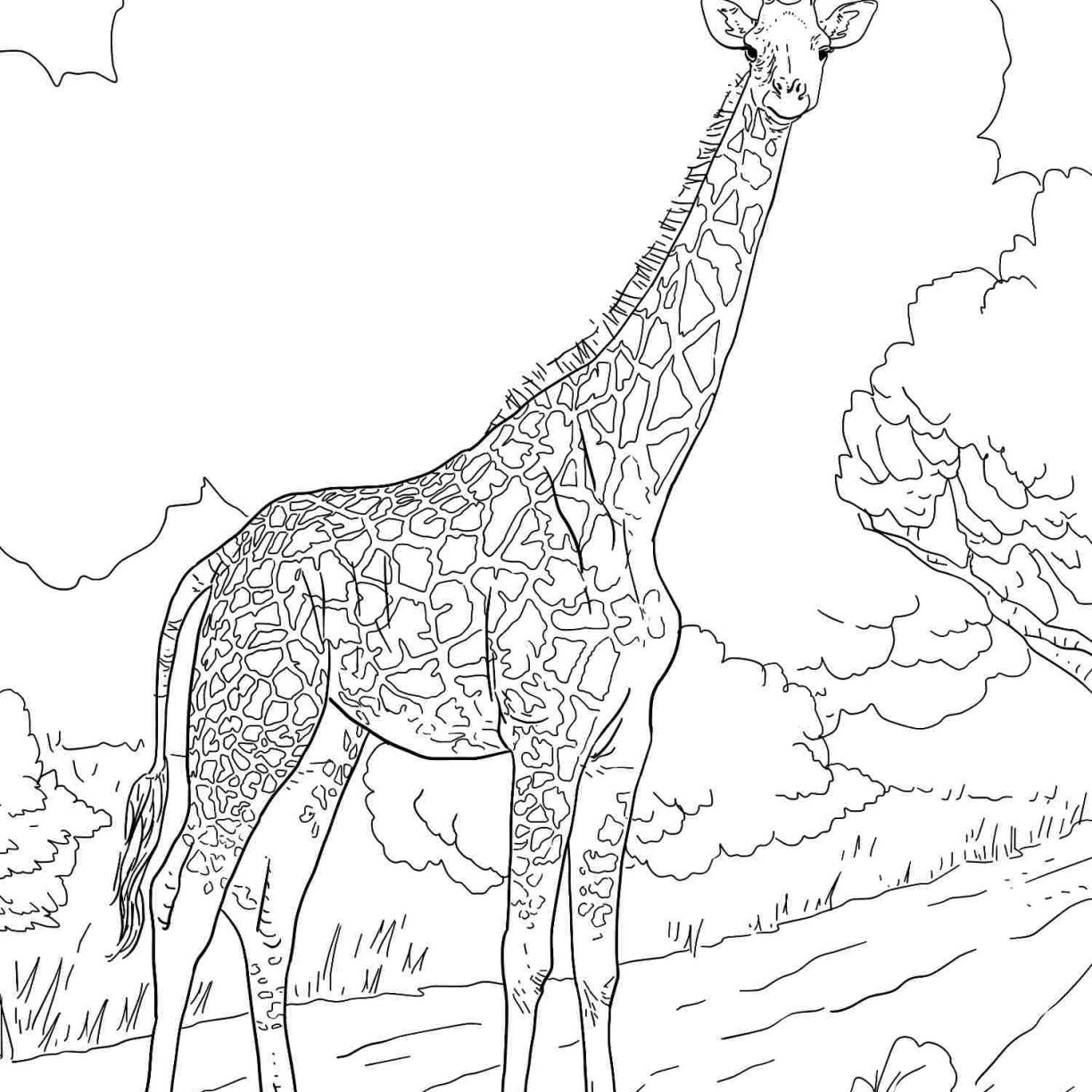 1224x1224 Baby Giraffe Coloring Pages Printable Color Colouring Cute Best