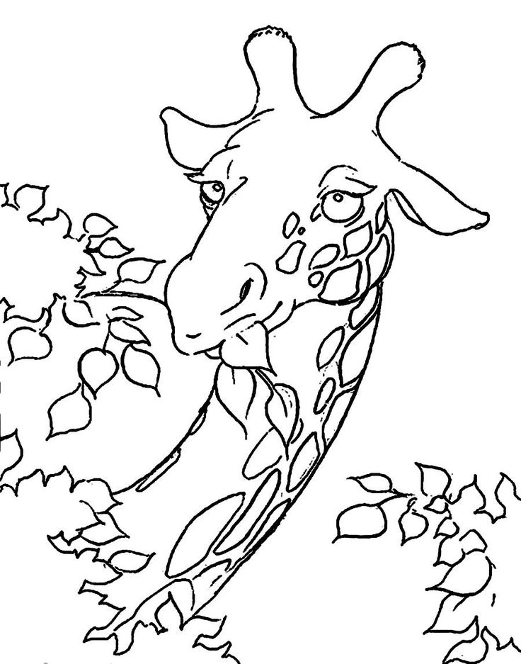 Giraffe Face Coloring Pages