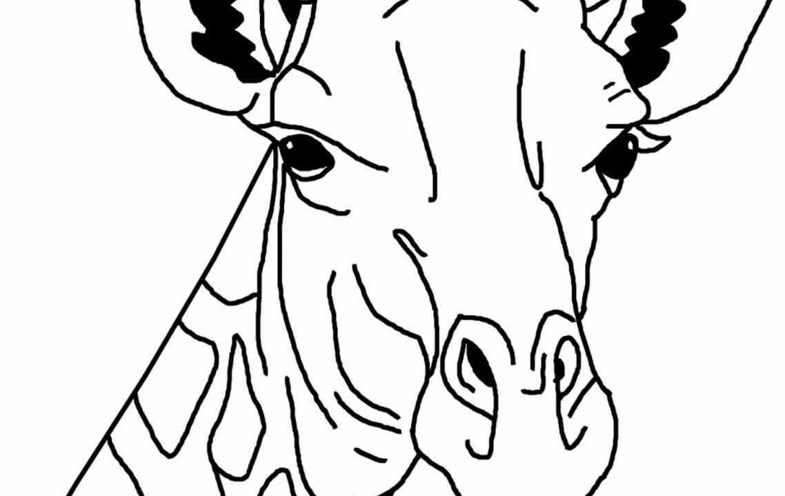 1138x720 Giraffe Coloring Pages Giraffe Pictures To Colour And Print