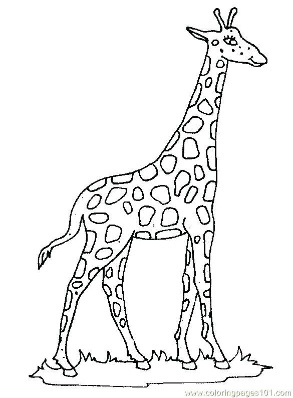 585x794 Giraffe Color Page Giraffe Coloring Page Giraffe Head Color Page