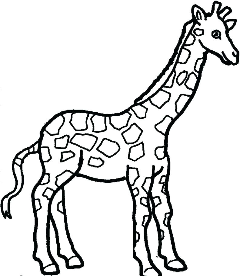 792x914 Giraffe Color Page Giraffe For Coloring Giraffe Coloring Sheet