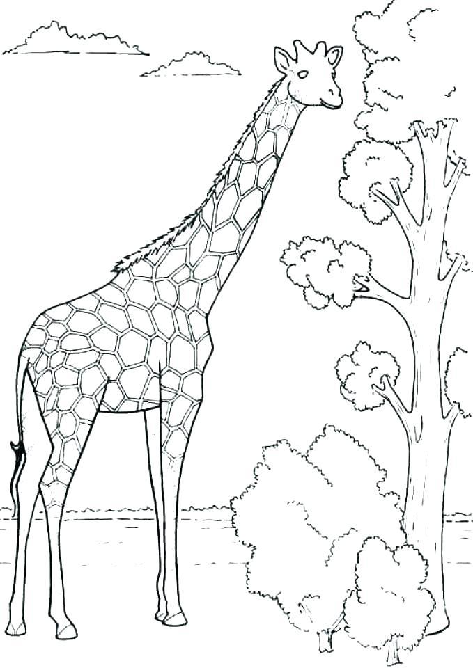 679x960 Giraffe Coloring Sheet Giraffe Coloring Pages Elegant Printable