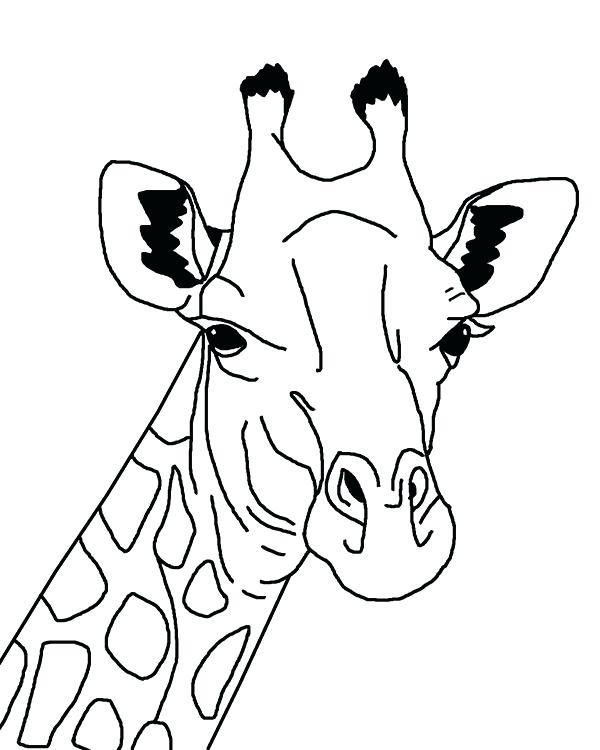 600x750 Giraffe Coloring Sheet Giraffe Head Coloring Page