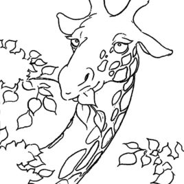268x268 Giraffe Head Coloring Page Kids Drawing And Coloring Pages