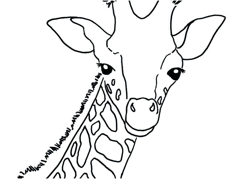 827x609 Giraffes Coloring Pages Baby Giraffe Coloring Pages As Well As