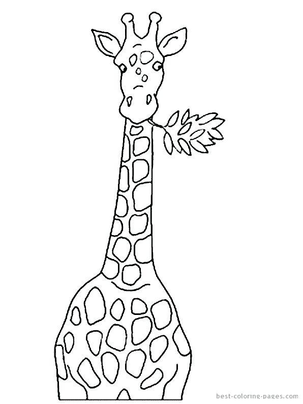 596x794 Line Drawing Of A Giraffe