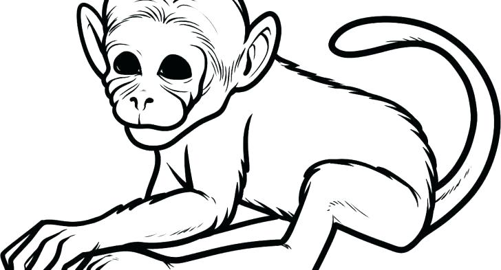 728x393 Baby Monkey Coloring Pages Printable Monkey Coloring Pages Monkey
