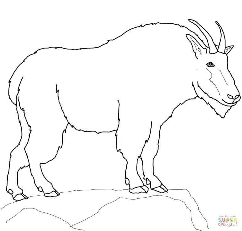 770x734 Goat Coloring Baby Goat Colouring Pages Coloring Wild Mammals