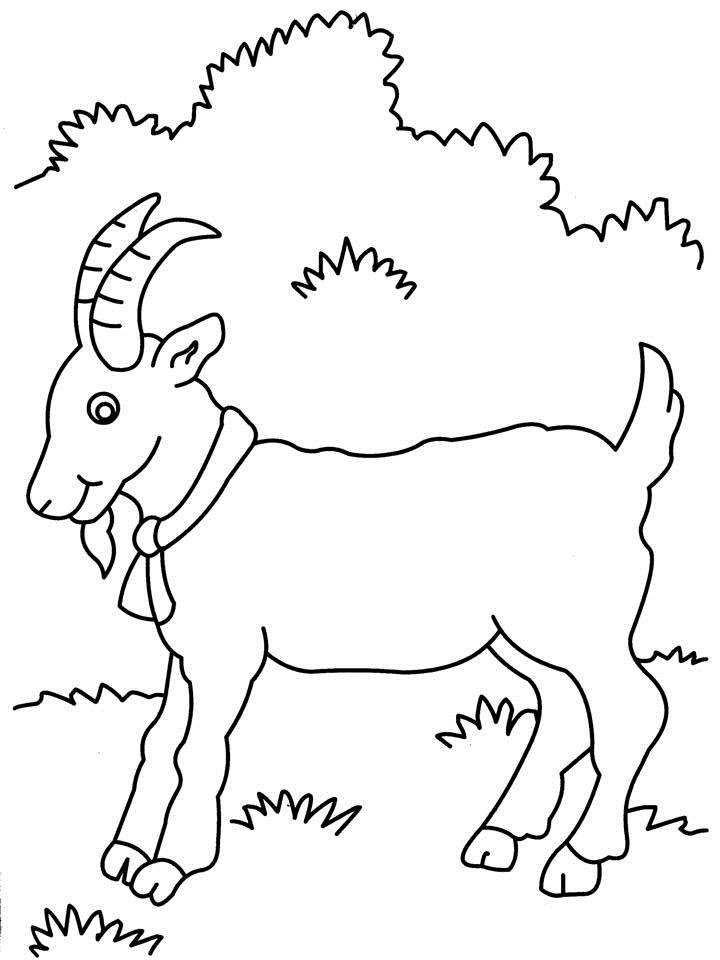 720x960 Goat Coloring Page Printable