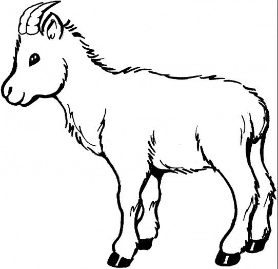 542x524 Baby Goat Coloring Page Coloring Book