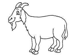 259x194 Mejores De Goat Coloring Pages En Animales
