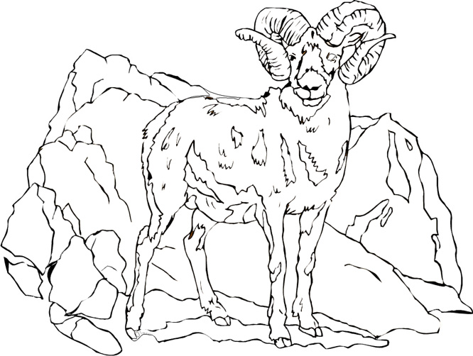 666x502 Mountain Goat Coloring Pages
