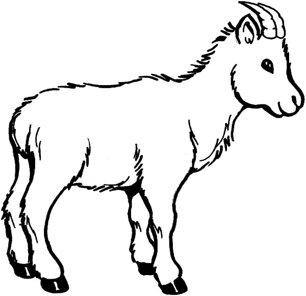 600x581 Wildlife Of Goat Coloring Pages Color Luna