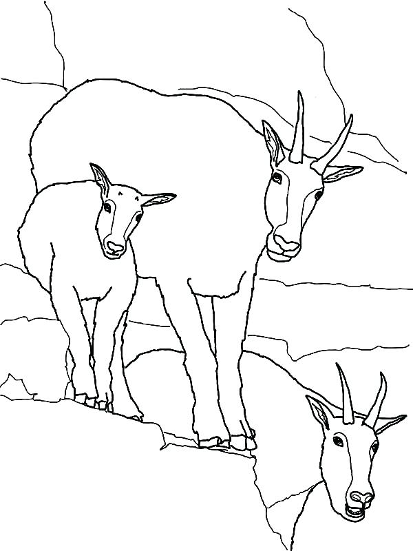600x800 Boer Goat Coloring Pages
