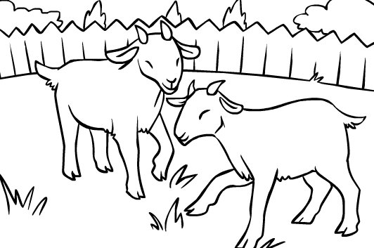 532x353 Baby Goat Coloring Pages Printable