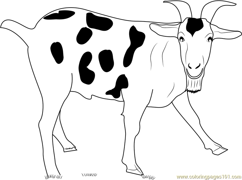 800x594 Black Spotted Goat Coloring Page