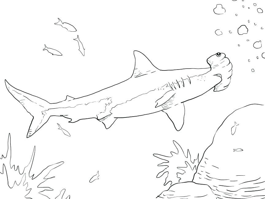 863x647 Marvellous Hammerhead Shark Coloring Pages Marvellous Hammerhead