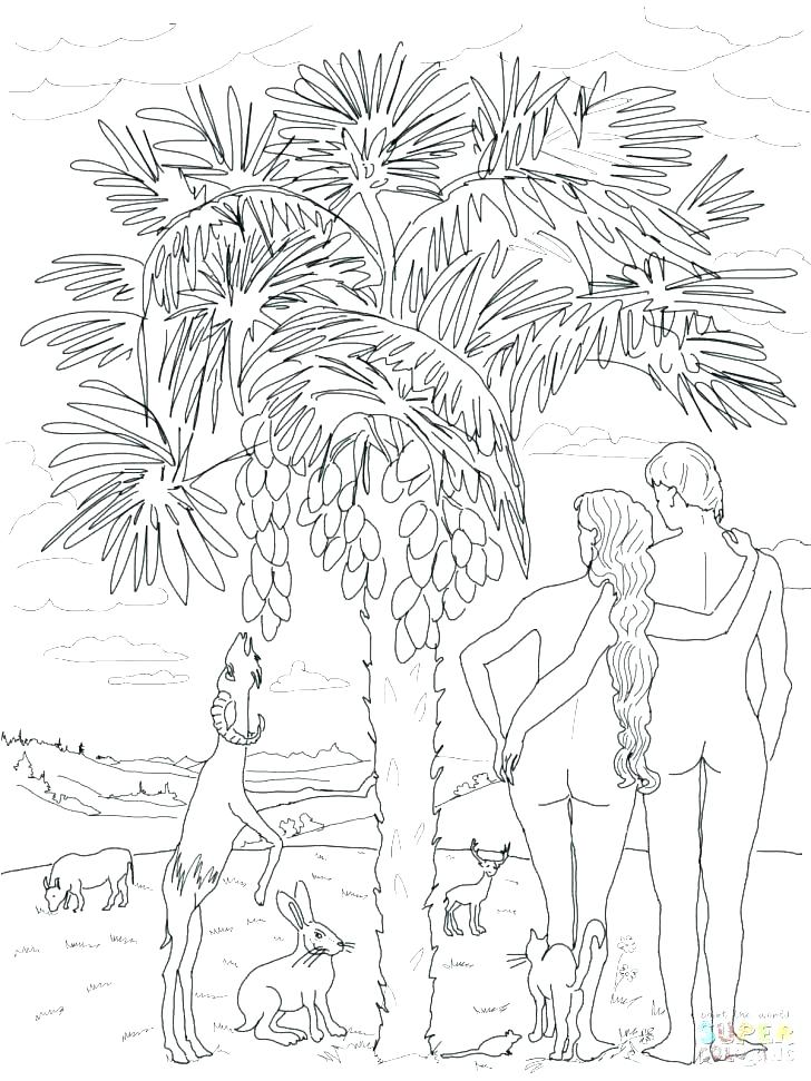 728x971 Creation Story Coloring Pages Coloring Page Revisited Story