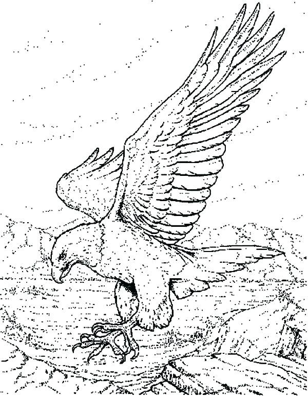 600x770 Eagle Coloring Page Bald Eagle Coloring Pictures Bald Eagle