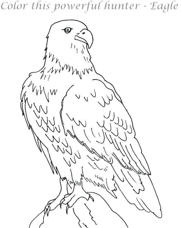 618x780 Eagle Coloring Page Easy Golden Eagle Coloring Page North Largest