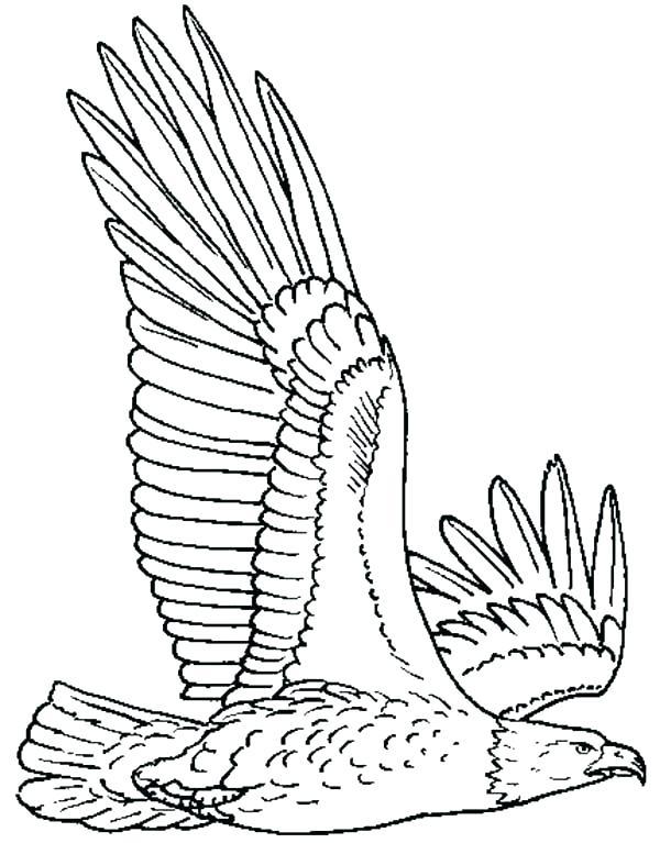 600x767 Eagle Coloring Page Fresh Bald Eagle Coloring Pages Online Color
