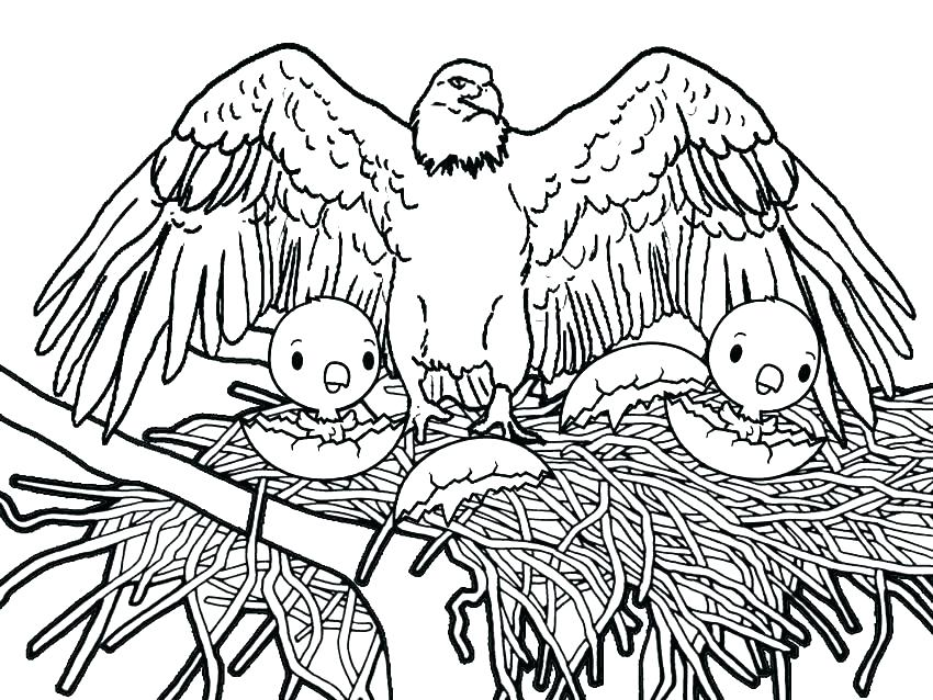 850x638 Eagle Coloring Page Fresh Bald Eagle Coloring Pages Online Eagles