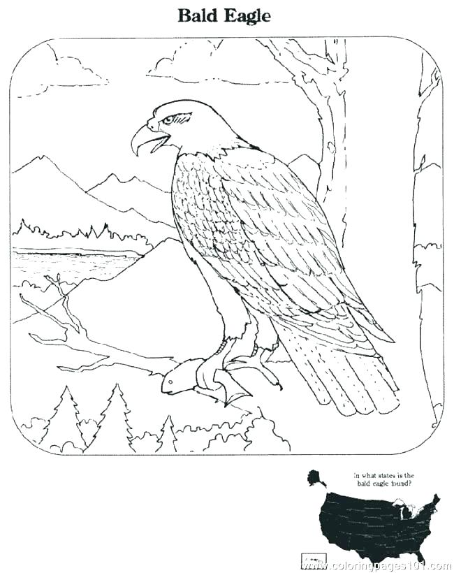 650x820 Eagle Coloring Pages Great Flying Bald Eagle Coloring Page Golden
