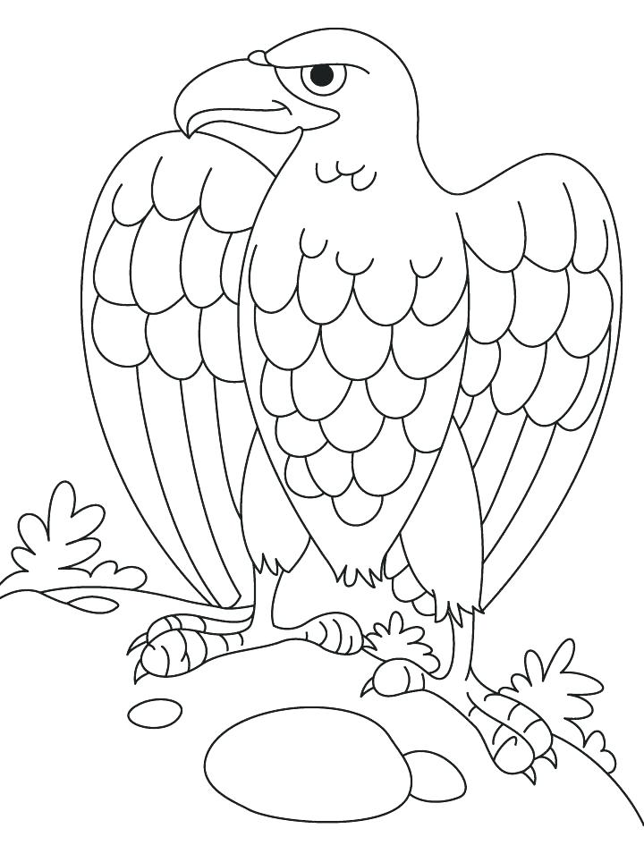 720x955 Eagle Coloring Pages Harpy Eagle Coloring Page Eagle Coloring