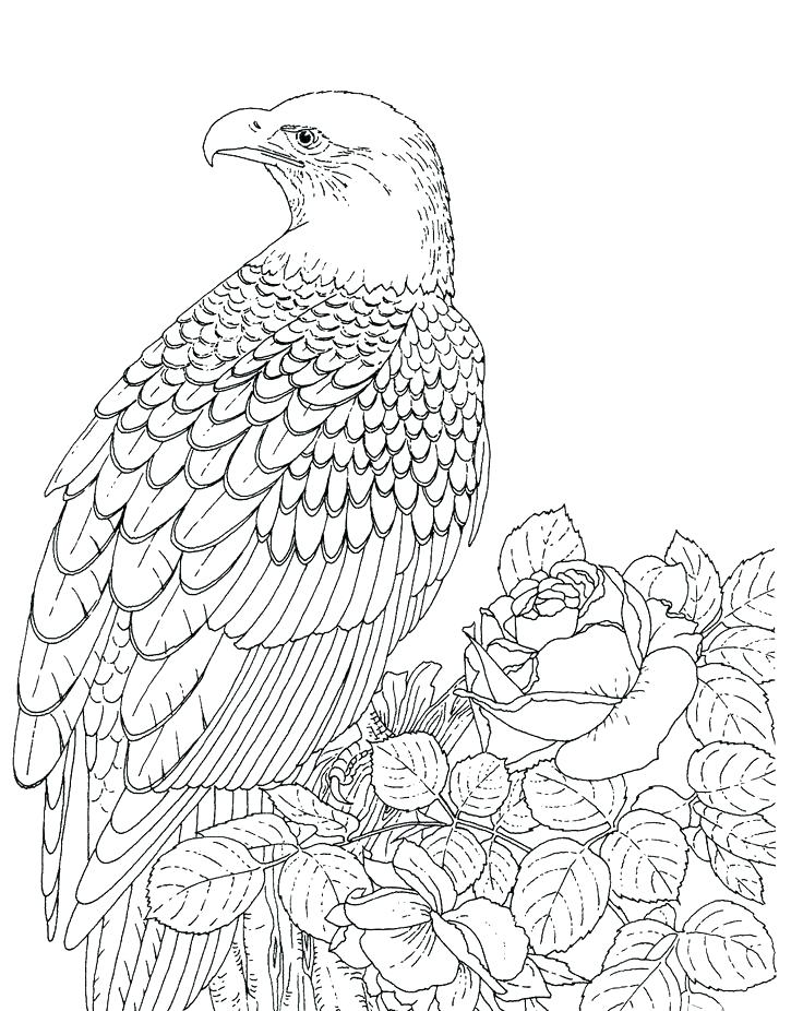 736x926 Eagle Coloring Sheet Baby Eagle Coloring Pages Mexican Golden