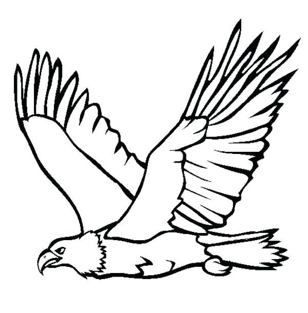600x610 Eagles Coloring Pages Trend Eagle Color Page In Free Coloring